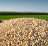 The Midwest soybean oil basis