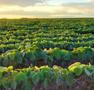 Soybeans take a hit