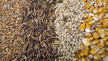 US wheat rating holds firm… meaning prices dip