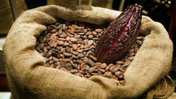 Ivory Coast Cocoa Farmers Concerned About Hot, Dry Weather