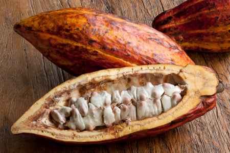 cocoa beans 450x299