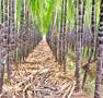 sugarharvest94x90