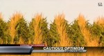 corn crop video