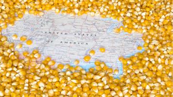 Corn, Soybeans, or Something Else? The U.S. Farmer's Dilemma